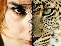 állat reinkarnálódik