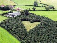 szív mező 1