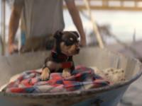 dog-ad
