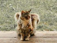 cica-angyal-8