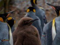Pingvin társkereső
